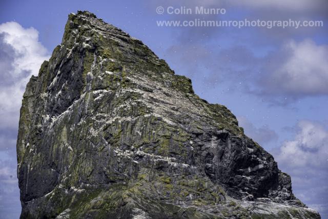Stac Lee, St Kilda archipelago, Outer Hebrides, Scotland, with thousand of gannets.